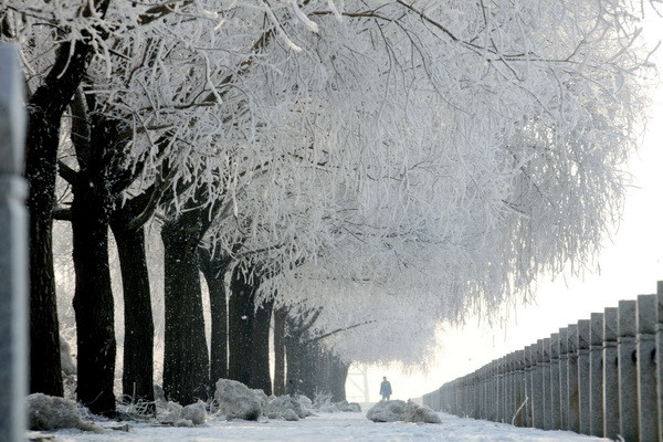 Chinese residents walk under rows of trees with iced branches along the riverbank in Jilin، northeast China's Jilin province on March 4، 2012. China said that two-thirds of its cities currently fail to meet new air-quality standards recently introduced that are based on the pollutants most harmful to health، and the cities will have four years to get their pollution levels down to the new limits، which cover levels of ozone and particulates measuring 2.5 micrometres or less، known as PM 2.5. CHINA OUT AFP PHOTO