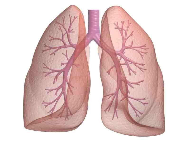 lungs_1
