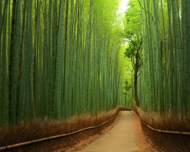 9-Bamboo-Forest-China